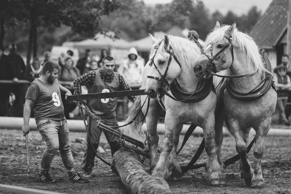 Furmanská súťaž ťažných koní v Belej nad Cirochou